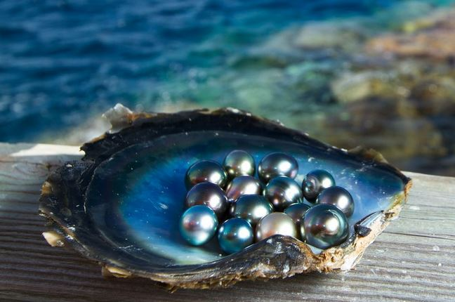 Origins of Tahitian black pearls