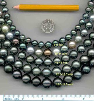 Origins of Tahitian black pearls