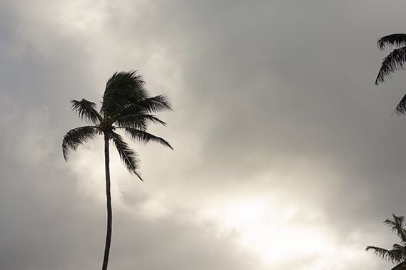 Palm tree blowing with cloudy skies