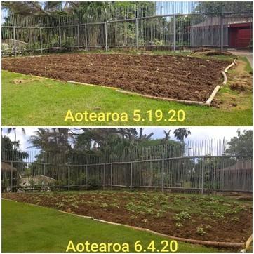 Aotearoa Gardens