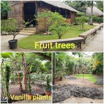 Fruit trees and vanilla plants in Tahiti
