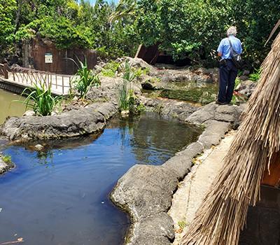 Hawaii Hidden Ponds