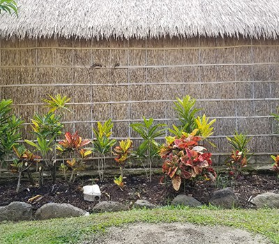 Croton Fiji