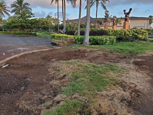NE corner looking into parking lot - Marriott - putting in new grass