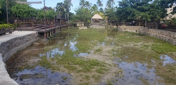 Lagoon into a lawn