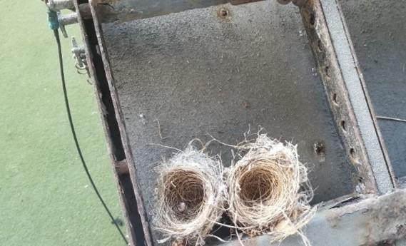 2 Bird Nest