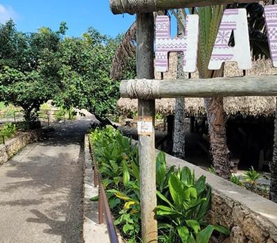 Hawaii 1 - Green ti leaf