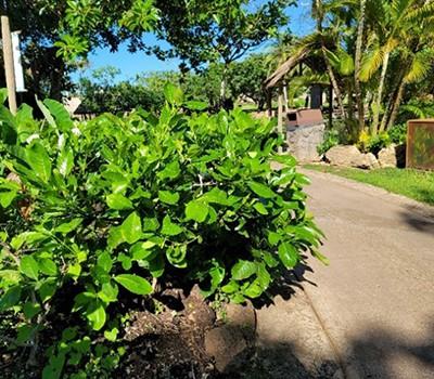 Tahiti 1 - Tiare Tahiti