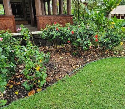 Tonga 1 - hibiscus